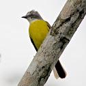 Tropical King Bird