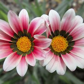 by Kris Pate - Flowers Flower Gardens