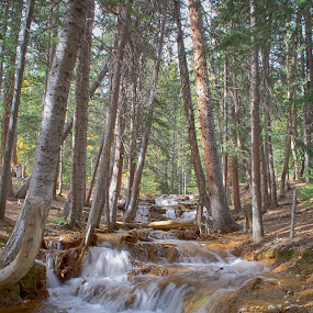 Creek Waterfall with trees by Heather Diamond - Landscapes Forests ( water, flowing, waterfall, colorado, flow, scenic, blur, landscape, tree, autumn, fall, creek, trees, scenery, relax, tranquil, relaxing, tranquility )