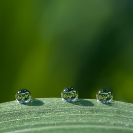 by Thomas Berwein - Nature Up Close Natural Waterdrops