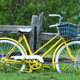 Yellow bicycle in the countryside by Rebecca Roy - Transportation Bicycles ( countryside, fence, yellow, vintage bicycle, bicycle )