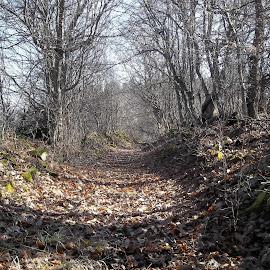 Време by Georgi Kolev - Nature Up Close Trees & Bushes ( небе., слънце., треви., храсти., листа., сенки., дървета., време. )