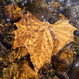 Fall on the river by Lisa Faith-Gregg - Instagram & Mobile iPhone ( water, fall, rock, leaves, river )