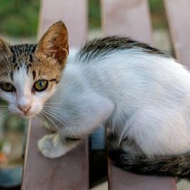 by Veli Toluay - Animals - Cats Kittens ( bank, burun, yüz, doğal, kedi evi, kedi yavrusu, kedi )