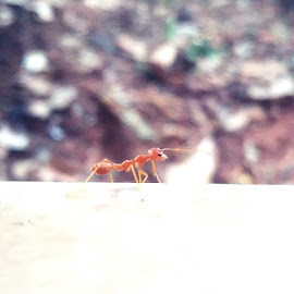 soldier by Sarathk Saraswathy - Instagram & Mobile Android ( nature, searching, ants )