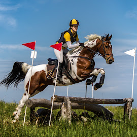 Show jumping 2 by Tommy Glad - Animals Horses ( jumping, riding, horse, show, showjumping )