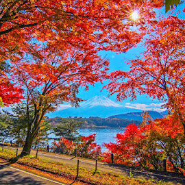 Last autumn in japan , mt.fuji by Alfa Proyostytyo Septianda Harsono - Landscapes Travel