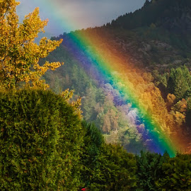 Rainbow hedge by Tom HD - Landscapes Cloud Formations ( hedge, red, nature, blue, green, colors, pink, yellow, rainbow )
