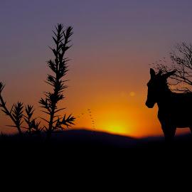 by Srbx  Cicapo - Landscapes Sunsets & Sunrises