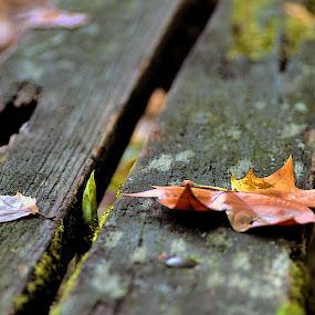 Outono dourado by Cristina Mestre - Nature Up Close Other plants