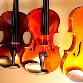 Strings by Judy Laliberte - Novices Only Objects & Still Life ( violins, color, dark, light, shadows )