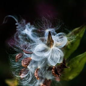 the spawn by Tim Hauser - Nature Up Close Other plants ( plant, nature, art, fine art, plant seeds, seeds )