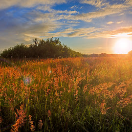 by Kennet Brandt - Landscapes Prairies, Meadows & Fields