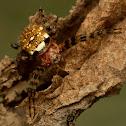 Gea spider