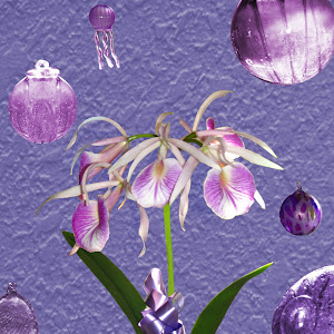 C:\Documents and Settings\Joe\My Documents\My Pictures\1Pixoto\New\Orchid and Glass.jpg