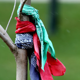 memorial by Carol Cooper - Artistic Objects Clothing & Accessories ( memorial, tree, artistic, bandanas )