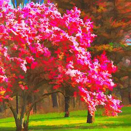 by Mark Wathen - Digital Art Places ( trees, landscape, flowers )