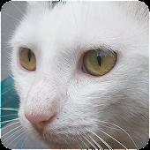 Katze geräusche