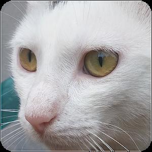 Cat Sounds For PC (Windows & MAC)