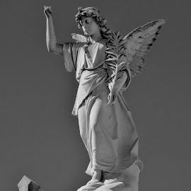 Cemetery Angel by Erin Czech - Buildings & Architecture Statues & Monuments ( angel, new orleans, cemetery, stone, cross,  )