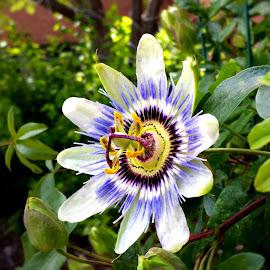 by Janken 919 - Flowers Single Flower