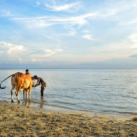mohesh..... by Ashif Hasan - Landscapes Waterscapes ( water, the padma, on the bank of the padma, men at work, mohesh by ashif hasan, cow batching, coexistance, people )