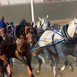 by Dmitri Vetrov - Animals Horses