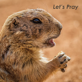 Let's Pray by Dave Lipchen - Typography Words ( gopher )