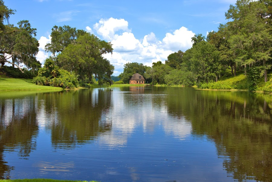 Middleton Place #3 by Cal Brown - Landscapes Travel ( travel photography, south carolina, pond, charleston, middleton place, historic, waterscape, water, landscape,  )