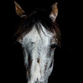 by Mark Helm - Animals Horses ( lighting, art, horse, head, fine )