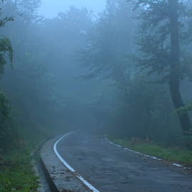 Through the fog by Дејан Лукић - Transportation Roads ( mountain, nature, wood, fog, trees, road )