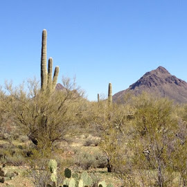 Tucson Foothills by Stephanie Lynn - Landscapes Deserts