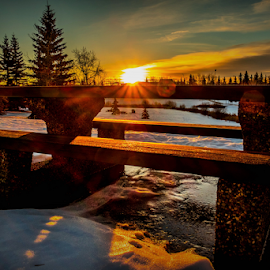 Millwood City Park by Joseph Law - City,  Street & Park  City Parks ( millwood, winter, snow, morning glory, trees, sunshine, edmonton, city park, picnic table )