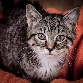 Cat-5793.jpg