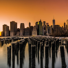 NYC Sunset by P Antonio Quinones - Landscapes Sunsets & Sunrises ( sunset, new york city, new york, landscape, birds, sun, golden hour )