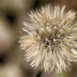 Beginnings  by Janice Mcgregor - Nature Up Close Other plants ( abstract, canon, macro photography, white, canon sl!, spring, bokeh, close-up, macro, outdoors, summer, seeds, canon photography, beginnings, outside, flower, flower photography,  )