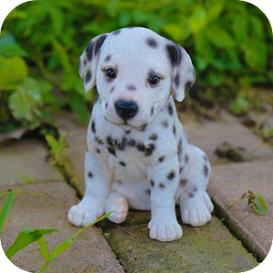 Animal Wallpapers For PC / Windows 7/8/10 / Mac – Free Download