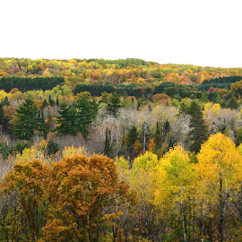 Overlook Scenic by Beth Bowman - Landscapes Forests