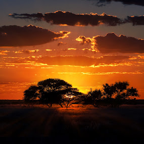 This is Africa by Bendik Møller - Landscapes Sunsets & Sunrises ( clouds, sky, color, silhouette, sunset, horizon, cloud, silhouettes, trees, africa,  )