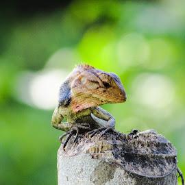 Ready To Hunt by Nayan Jyoti Kalita - Animals Reptiles ( lizard, hunting )