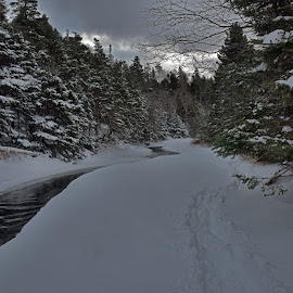Winter Tranquility  by Harold Bradley - Landscapes Forests ( calming, beautiful, covering, white, sedate, forest, heavy, woods, wintertime, amazing, laden, walking and hiking trails, fluffy, winter, color, snow, trees )