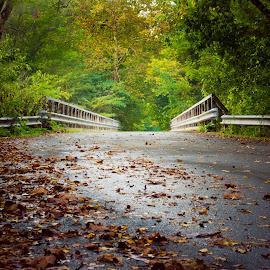 Fall Bridge by Virginia Folkman - Landscapes Forests ( fall, leaves, bridge, autumn )