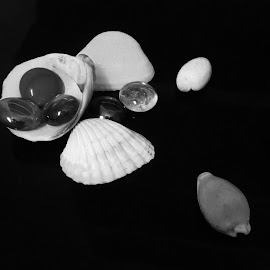 Shells by Shreya Bansal - Novices Only Objects & Still Life ( abstract, shell, macro, black and white, still life, glass, stones, objects )