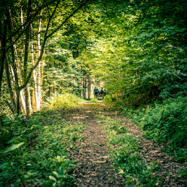 Forest Trail by Johannes Oehl - Landscapes Forests ( wilderness, tree, green, trail, trees, forest, germany, people )