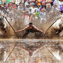 Pacu jawi by Andi Empe - Sports & Fitness Rodeo/Bull Riding