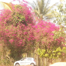 by Aby Charly - Nature Up Close Trees & Bushes