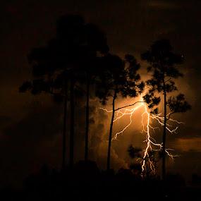 Pinelands Lightning by Troy Wheatley - Landscapes Weather ( lightning, trees, night, pine, #GARYFONGDRAMATICLIGHT, #WTFBOBDAVIS,  )