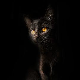 Panda by Tea Jo - Animals - Cats Portraits ( cat, shadow, green eyes, portrait, black cat )