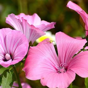 by Zoran Zoki Crnković - Flowers Flower Gardens (  )