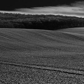 Waves at Boleradice by Antonín Vystrčil - Landscapes Prairies, Meadows & Fields ( field, forests, moravia, south moravia, boleradice, czech republic, meadow, trees, tracks, storm )